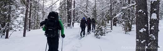 Door de bomen richting de Freibrunner Spitze